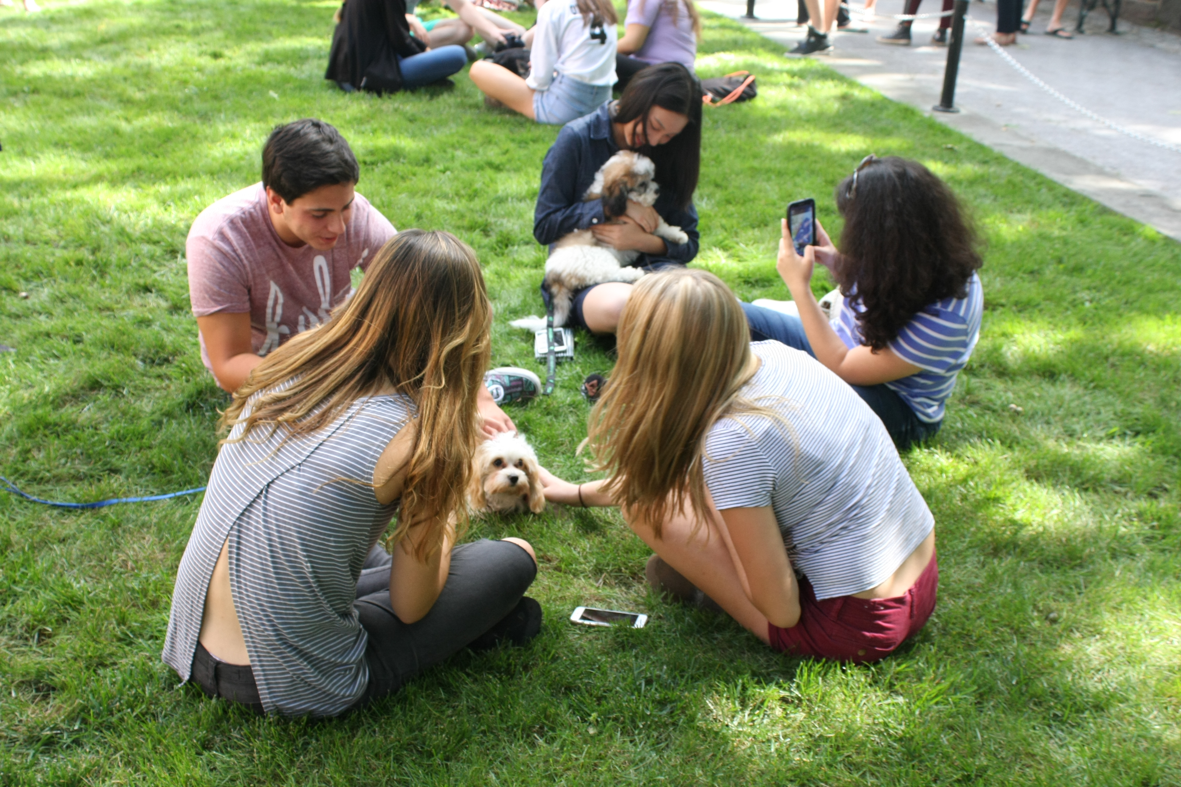 Image result for puppies on the quad